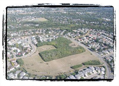11-oleskiw-treestand-landing-page.jpg
